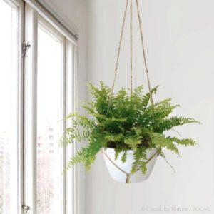 Extra Large Macrame Hanging plants