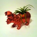 Copper hippo air plant(er)