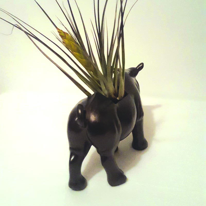 Brushed Oil Rhino Air Plant(er) bum